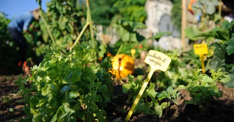 Jardinage et coins nature Ministère de l'Environnement